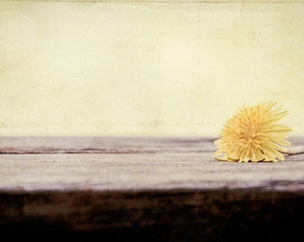 "Modern Photography - pale yellow wall art light nature dandelion print flower fine art photo pastel decor 8x12, 10x15 Photograph, ""Fragile"""