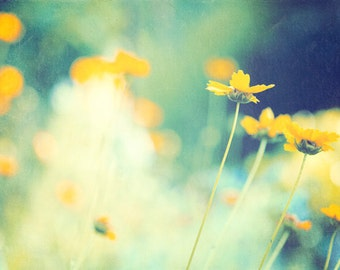 """Flower Photography - green art print botanical wall art decor navy yellow daisies spring photo - 8x12, 12x18 Photograph, """"In the Meadow"""""""