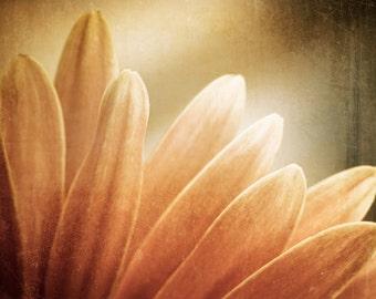 "Modern Flower Photography, brown orange autumn fall beige rustic rust nature gold print botanical wall art - 11x14, 8x10 Photograph, ""Flare"""