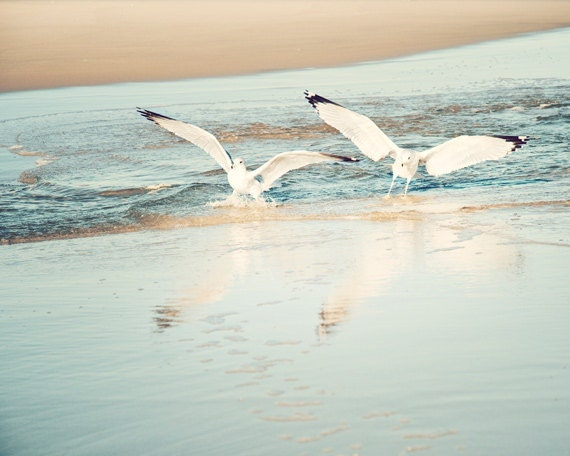 "Beach Photography - seagulls birds light blue print seashore decor beige white fine art wall photo - 11x14, 8x10 Photograph, ""Journey's End"""
