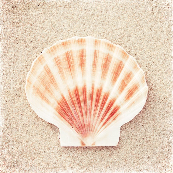 peach sea shells scroll - photo #10