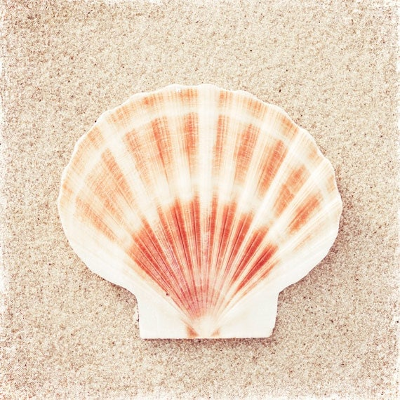 Seashell Photography Beach Sea Shell Peach By CarolynCochrane