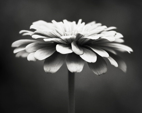 Easy Black And White Photography