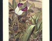 1915 Devil's Flower Insect Antique Print Brehms Animal Life