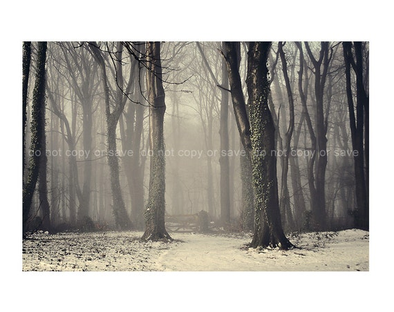 Woodland Tree Snow, Grey White Black, Vintage whimsical 12x8 inch Fine Art Photography