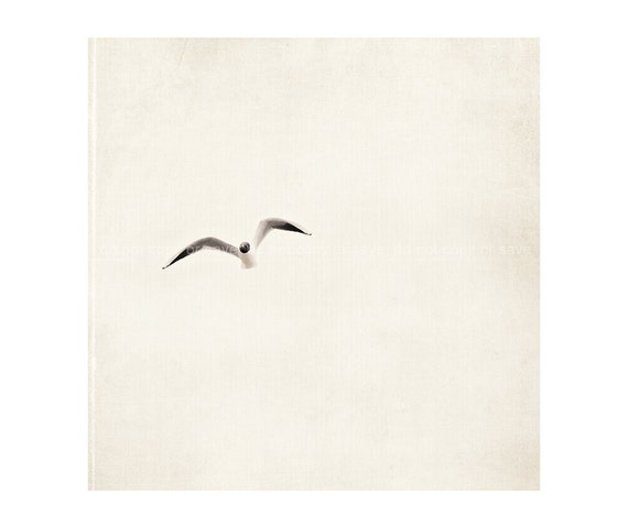 Bird Simple Vintage, White Grey, Nautica Shabby Chic whimsical,  - 8x8 inch - Fine Art Photography
