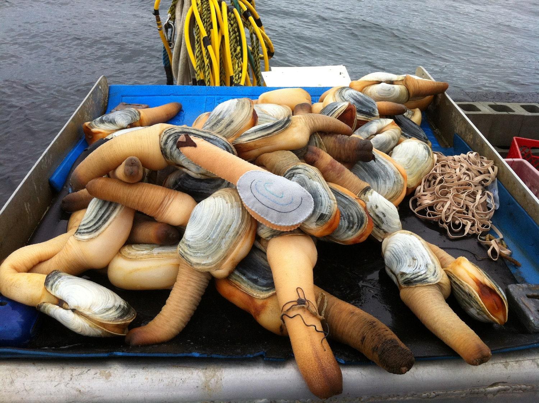 Китай снял запрет на импорт моллюсков с Западного побережья США