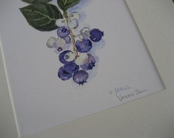 Blueberries Watercolor Print