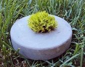 Living live organic natural moss potted plant sustainable concrete cement desk plant