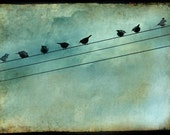 Birds Fine Art Photography