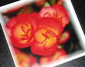 Pack of 6 Blank Greetings Cards - Fire Petal (108) - Thank You Note Card Set Notelets Birthday Flower Floral Red Orange