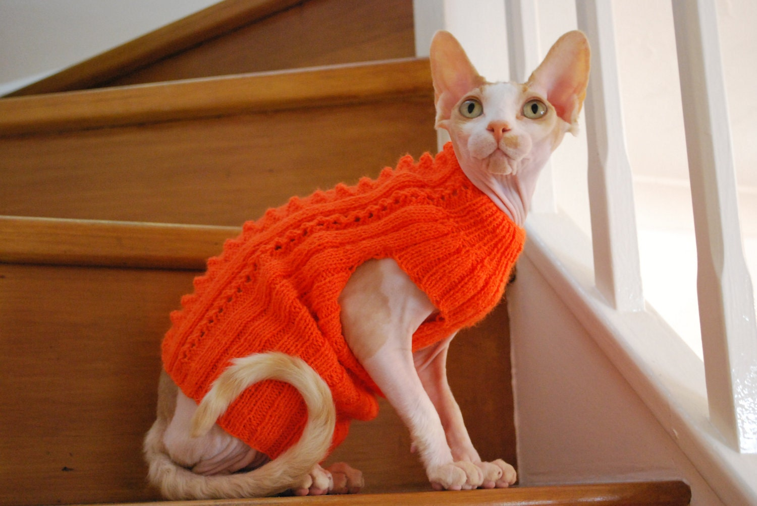 Knitting Pattern Cat Clothes : Knit sweatermerino wool hand-knitted sweater for small dogs