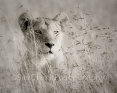 WILDLIFE PHOTOgraphy -  Animal Photography, African Photography, Nursery Art, Wall Art, Nature photography, black and white