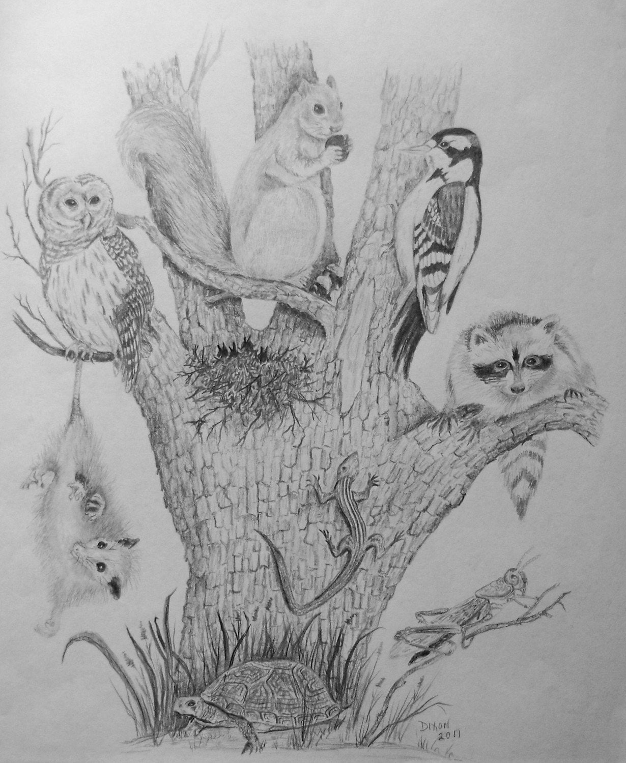 Nature Pencil Drawing Tree of Life with a Variety Raccoon Painting