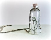 Gypsophilla-Baby breath-curiosity bottle- vial necklace- Real dried flower -Specimen, glass vial. gift for her