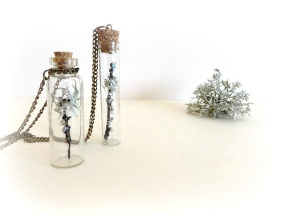 Lichen on twig -  vial necklace Botanical specimen curiosity bottle real preserbed plant flower mint green grey Gift for her