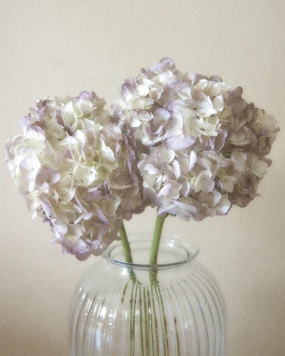 50% OFF SALE on In-Stock Prints - Hydrangeas II - Fine Art Photography, Flowers, Blossoms - 8x10