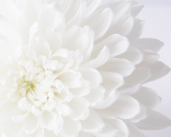50% OFF SALE on In Stock Prints - Mums - Fine Art Photography - Flower, Close up, Bloom, Blossom, Wall Art, White, Petals - 8x10