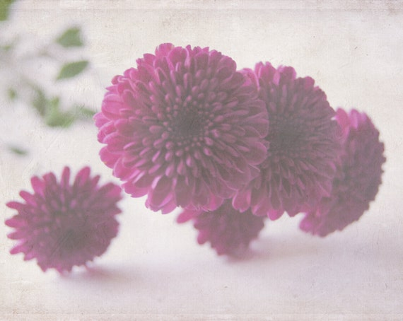 Purple Blossoms - Fine Art Photography - Nature, Flowers, Blooms, Romantic, Elegant, Vintage Inspired - 8x10