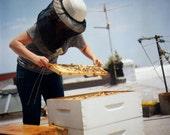 Online Urban Beekeeping 101 Workshop