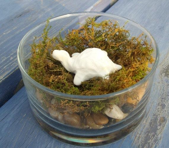 Feng Shui moss terrarium decoration bone white turtle