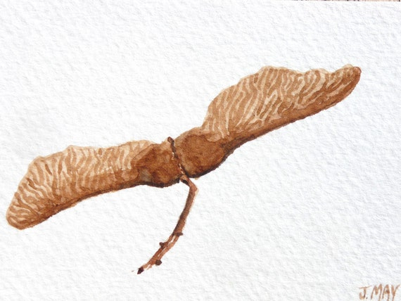 Maple seeds original watercolor painting on ACEO card