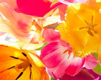 Digital Download Nature Photography - Tulips, Flowers, Colorful, Bright, photo  for print