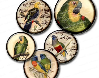 Colorful Parrots Birds  Vintage  handwriting  Circles 1in,  2in  -  Digital Collage Sheet, Download for Resin Pendant, Round  Images 103