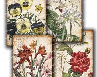 Vintage Old Botanical plants flowers  hand drawing, old paper -  Digital Collage Sheet instant  Download Scrapbooking Supplies