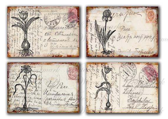 Vintage Blumen Auf Alten Postkarten Frühling Tulpen Iris