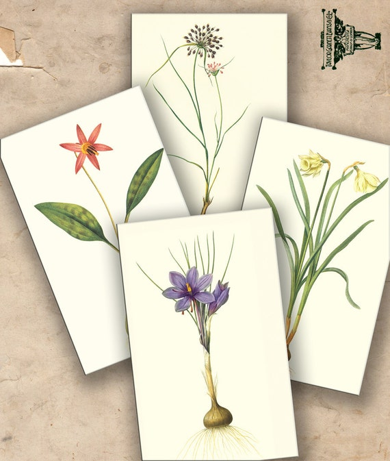 Vintage Botanical plants  flowers roots-  Gift tags, ACEO cards, Printable Digital Collage Sheet to downloadable images 127
