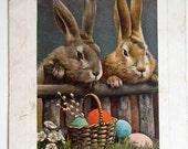 Vintage Raphael Tuck Easter Bunny Rabbits Photo Postcard