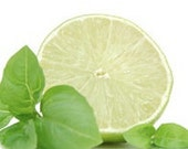 Cool Citrus Basil - American Natural Soy Candle - 50 plus hour burn time