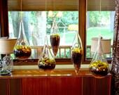 Modern Hanging Moss Terrarium