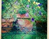 Terracotta petunias flower photo in purple and yellow 12x12