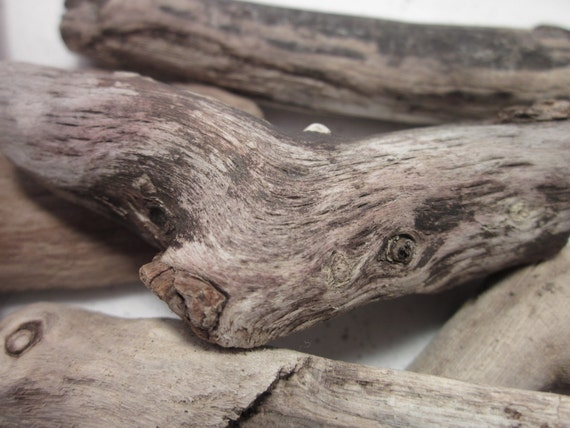 Natural driftwood from the Oregon coast 6