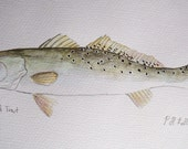 """Speckled Trout - Watercolor on 9"""" x12"""" Watercolor Paper"""