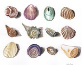 Sea Shells, Original Watercolor Painting, Framed & Matted