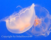 Jelly Fish Nature Images Jelly Fish Sea life