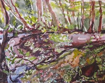 Woodland Wonders at Califon Gorge, NJ -  Original Watercolor Painting
