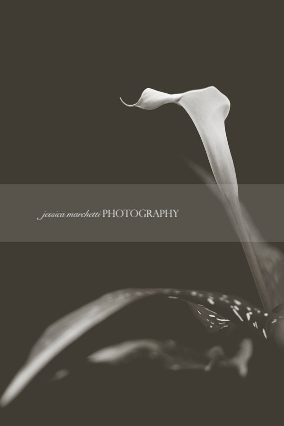 Wall Art - Nature Photography, Black and White photography, Floral Photography, botanical print, framed botanical print, Calla Lily
