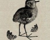Baby Bird Instant Download Digital Image No.29 Iron-On Transfer to Fabric (burlap, linen) Paper Prints (cards, tags)