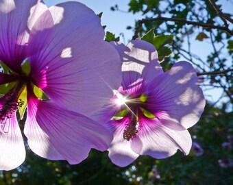 Ray of Sunshine Flowers Photograph 8x10