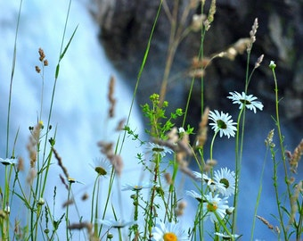 Snoqualmie Falls Flowers Photograph 8x10