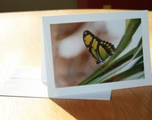 Green Butterfly Photo Greeting Card (blank inside)