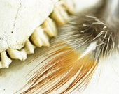 Rustic Abstract Still Life / Of Natural History / Neutral Rustic Bone Feather / 8x10