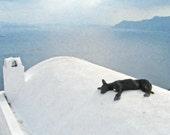 Canvas Photo, Greek Dog, Santorini, Greece, Church, Ocean, Tranquil, Blue, Gallery Wrap
