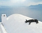 Photograph, Photo, Sleeping Dog, Ocean, Volcano, Blue, Water Color, Peaceful Santorini, Greece