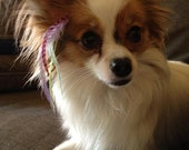 HUGE STOREWIDE SALE Pet Locks -- Feather Hair Extensions for your Pet -- You Choose Colors  (includes beads) :)