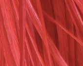 5 Vibrant Red Long Thin Solid Feather Hair Extensions (includes beads) NL -- Cruelty Free